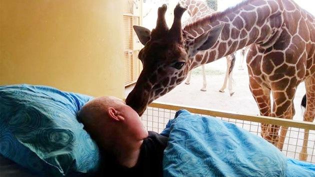 beso girafa